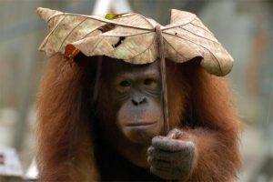parapluie troue