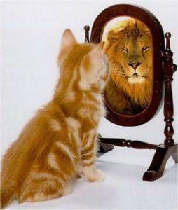 confiance en soi lion chat 700