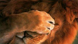 confiance en soi timidite lion